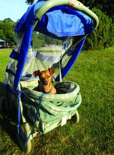 One trip to the thrift store + a little luck = DIY doggie stroller!