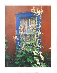 Santa Fe  Hollyhocks are so New Mexico. I grandmother had them outside of every house she lived in.
