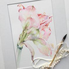 """""""Амариллис... Теперь в следующей фазе #art #artist #paint #painting #watercolor…"""