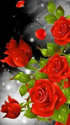 "Search Results for ""red rose hd live wallpaper"" – Adorable Wallpapers Rose Flower Wallpaper, Flowers Gif, Beautiful Rose Flowers, Beautiful Flowers Wallpapers, Pretty Wallpapers, Exotic Flowers, My Flower, Flower Art, Beau Gif"