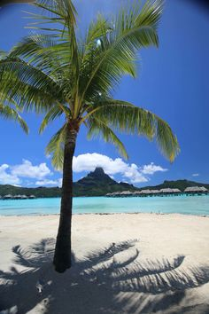 Palm tree in paradise. Looks like a nice place to spend the afternoon in Bora Bora.
