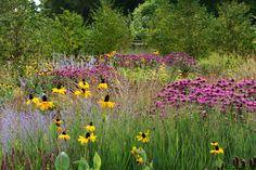 garden at Scampston, designed by Piet Oudolf