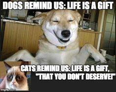 Cats vs Dogs  http://animalbuzzer.com/cats-vs-dogs/