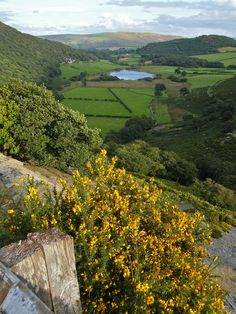 bellasecretgarden: wanderthewood: Wales by David-Gifford on Flickr