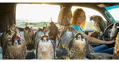 Women and Falconry: Rebecca Bledsoe Makes it Look Cool