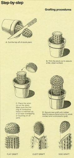 cactus. perhaps.