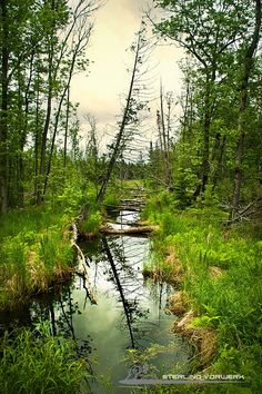 A stream in Voyageurs National Park in Minnesota..another park I love - must take Family