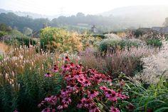 Dove Cottage Nursery and Garden in West Yorkshire (UK). Prairie Planting, Prairie Garden, Meadow Garden, Dream Garden, Cottage Nursery, Garden Nursery, West Yorkshire, Linden Gardens, Prairie Meadows