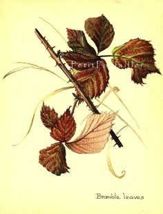 edith holden art   Edith Holden Edwardian garden botanical