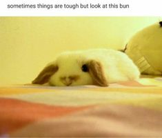 Funny Memes Animal Themed Memes That Will Surely Make You Laugh (50+ Pictures)