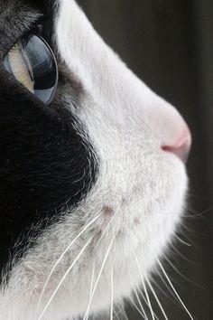 beautiful kitty cat face profile...