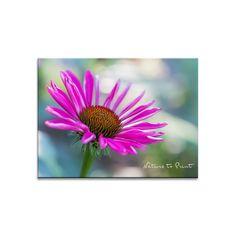 Blumenbild: Wach geküsst, roter Sonnenhut erwacht | Leinwandbild im Wunschformat