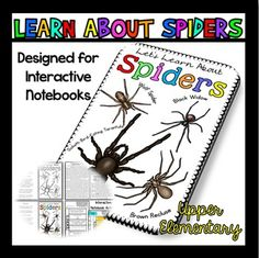 Spiders: This passage is about spiders, and it is a great way to welcome the fall season, especially to use around Halloween, or use it any time you are studying spiders or reading non-fiction.  It's a fun informative passage to learn some interesting facts about spiders.
