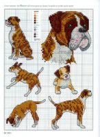 Gallery.ru / Фото #20 - Picture Your Pet in Cross Stitch - patrizia61 boxer bulldogs.