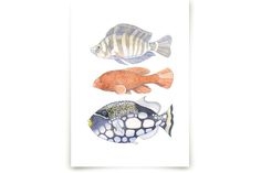Three Fish Art Prints by Natalie Groves at minted.com