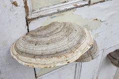 """""""Dorothy Cross - Doorway, 2014 wooden door and tree fungi 198 x 71 x 19 cm / 78 x 28 x 7.5 in """""""