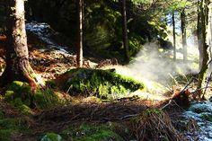 Norway . Bergen . Wood Randonnée dans les forêts magnifiques de Bergen