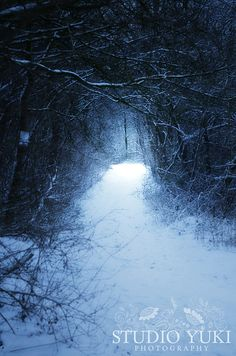 Narnia - Surreal Photograph, Dark Blue, Ethereal, Path Snow, Enchanted Forest Photography, Magical, Mysterious Light, Fantasy