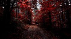 Jesień, Las, Drzewa, Droga