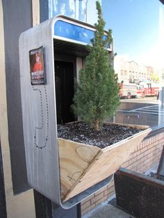 Neat!!  Found: Guerrilla gardening in New York.   A vacant phone box is re-purposed into a planter for a slow growing Alberta spruce. :)