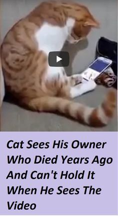 Pin by Ellen Weitman on pussy funny cats and dogs compilation. funny animals compilation try not to laugh. funny animals 2019 try not to laugh. Cute Funny Animals, Cute Cats, Funny Cats, Crazy Cat Lady, Crazy Cats, Beautiful Cats, Animals Beautiful, Beautiful Creatures, Animals And Pets