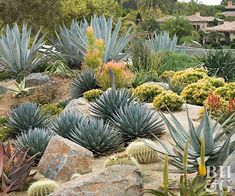 Succulent Rock Garden Ideas How to Create a Green Wall With Succulents Succulent Rock Garden Ideas. Making a rock garden using succulent is a bit challenging. Outdoor Cactus Garden, Succulent Rock Garden, Backyard Garden Landscape, Succulent Landscaping, Dry Garden, Small Backyard Gardens, Outdoor Plants, Garden Landscaping, Outdoor Gardens