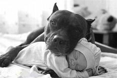 Baby and dog <3 the fierce protectiveness, tenderness and love this picture shows