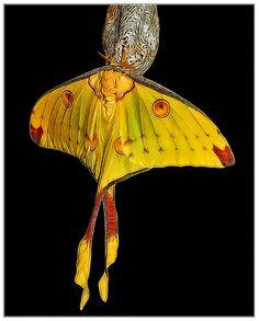 Madagascan moon moth....#hiphop #beats updated daily => http://www.beatzbylekz.ca/