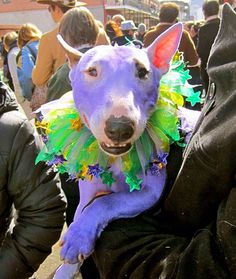 All Decked Out--Mardi Gras Pets