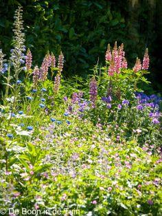 siertuin engelse border ridderspoor geranium nepeta Dit en nog veel meer op: De Boon in de Tuin http://deboon.blogspot.nl bijen, biodiversiteit, reddebijen, red de bijen, de rijke weide, eenjarigen, engelse tuin, roze border, blauwe border, engelse tuin aanleggen, hoe maak je een engelse border, ridderspoor, delphinium, nepeta, kattenkruid, geranium, planten border maken, border aanleggen, foto's van tuin, tuinen