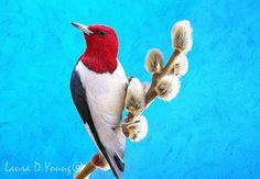 Red Headed Woodpecker Bird Red Woodpecker Blue by FineArtography