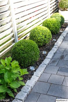 Loving the boxwood and hydrangea combo. Also the fence is amazing! Walkway great too! Love it
