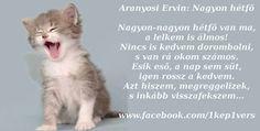 Humor, Words, Fun, Animals, Animales, Animaux, Humour, Moon Moon, Animal