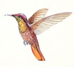 Hummingbird. Original watercolour. Glitter. Decoration.