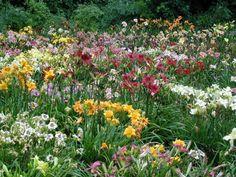 Flowers , Greenville
