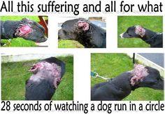 Stop dog fighting and animal abuse.  https://fbcdn-sphotos-e-a.akamaihd.net/hphotos-ak-ash4/484310_547109215333895_1065888120_n.jpg