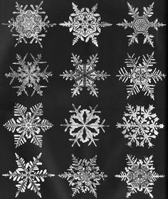 Actual snowflake images by Snowflake Bentley.  His amazing images over 50 years proved no 2 snowflakes are the same.