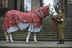 In memory of the animals that lost their lives in WWI. Lady Jane wears a Poppy Rug on the steps of Coventry Cathedral