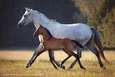 How i love this.....those legs! Gorgeous mare and foal