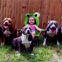 """Images of Pitbull dog both puppy and adult are shared in this post. Those dog breeds that are mixed with bull breeds are known as """"Pitbull"""". Love My Dog, Puppy Love, Animals And Pets, Funny Animals, Cute Animals, Animal Funnies, Beautiful Dogs, Animals Beautiful, Beautiful People"""