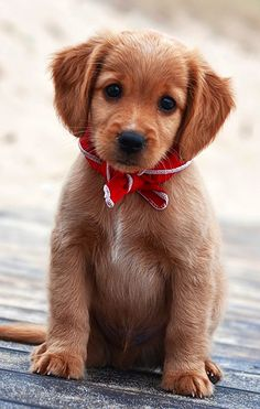 Pretty bow and handsome pup