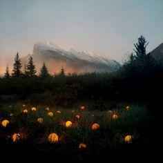 Lights in grass