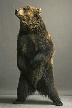 Awesome Bear Photography!