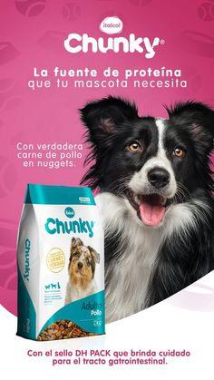 8 Ideas De Varios Limpieza Dental Perros Recien Nacidos Lenguaje Corporal De Perro