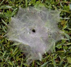 Photography of Spider Webs