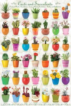 Cactus & Succulents Collage Posters at AllPosters.com