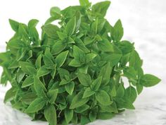 """BASIL, GREEK DWARF. Cute little compact plants are only 6"""" tall and are great for growing in containers."""