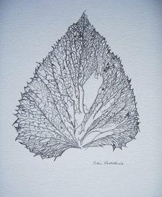 leaf skeleton drawing by Eileen Postlethwaite … Botanical Illustration, Illustration Art, Leaf Skeleton, Skeleton Drawings, Drawing Exercises, Leaves, Creative, Nature, Skeletons