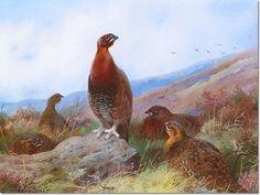 Bird Art Repro on Canvas or Paper Danger Aloft Ptarmigan by Archibald Thorburn