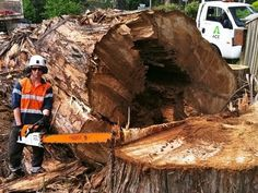 """Big Extreme Hazard Crane Tree removal Removals ACE """"Sail Song"""" Awolnation"""